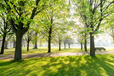 Canvas print Tree in the park with sunlight  and shadow in the park early in the morning.
