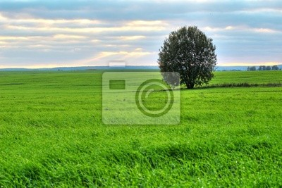 Tree on a green pasture