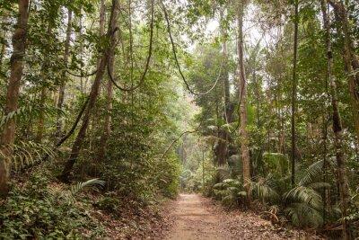 Canvas print Tropical rainforest