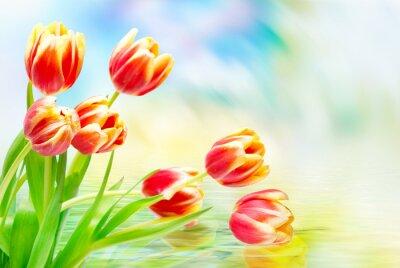 Canvas print Tulip flowers close up