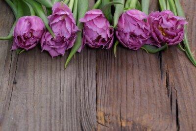 Canvas print Tulipany