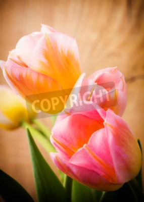 Canvas print Tulips, floral background.
