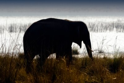 Canvas print Tusked male Indian elephant (Elephas maximus indicus) with Ramganga Reservoir in background - Jim Corbett National Park, India