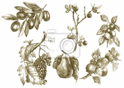 twigs and fruits, vintage, hand drawing into vector