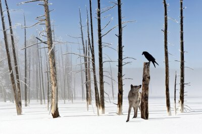 Canvas print Two seconds to live - Wolf and Raven