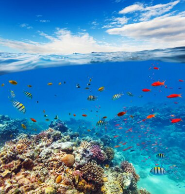Canvas print Underwater coral reef with horizon and water waves