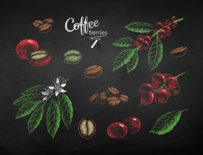 Canvas print Vector chalk drawn set of coffee illustrations