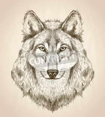 Canvas print Vector sketch illustration of a wolf head front view, black and white vector wildlife design.
