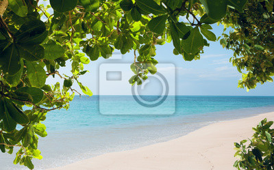View of nice tropical beach with some leafs