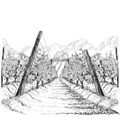 Canvas print Vineyard landscape with clouds and building on the hill. Hand drawn sketch vector illustration on white