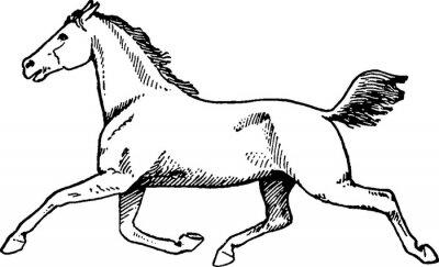 Canvas print Vintage drawing horse
