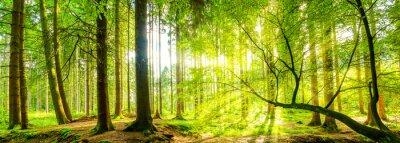 Canvas print Wald Panorama mit Sonnenstrahlen