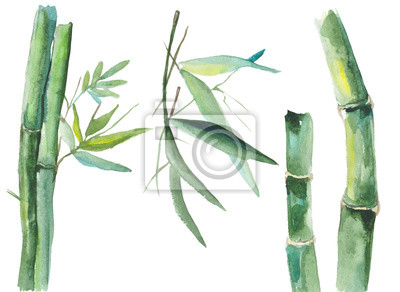 Canvas print Watercolor bamboo illustration