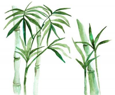 Canvas print Watercolor bamboo illustration