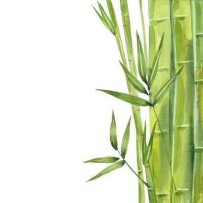 Canvas print watercolor bamboo stalks