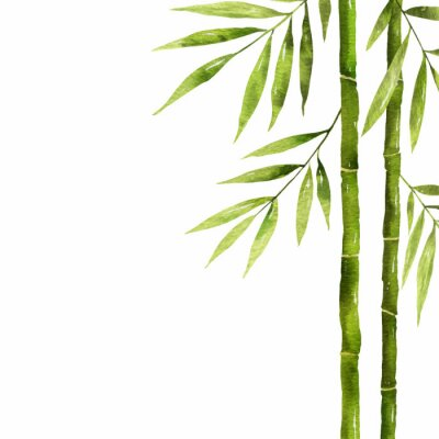 Canvas print Watercolor bamboo stem with green leaves and copy space.
