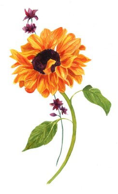 Canvas print Watercolor drawing of golden sunflower with green leaves on white backround
