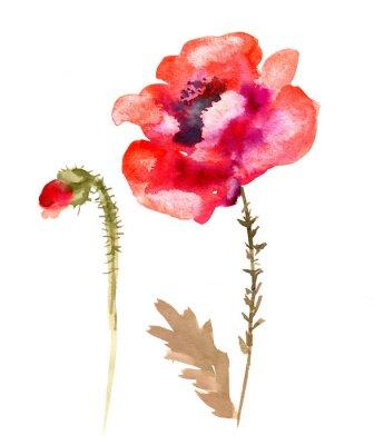 Canvas print Watercolor flower poppy