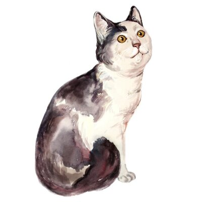 Canvas print Watercolor illustration of ugly cat looking confused