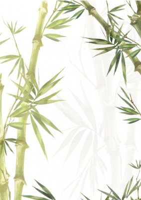 Canvas print Watercolor illustration painting of bamboo leaves , on white background