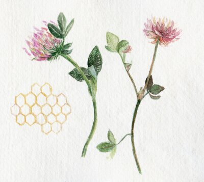 Canvas print Watercolor illustration with clover and honeycomb on white background.