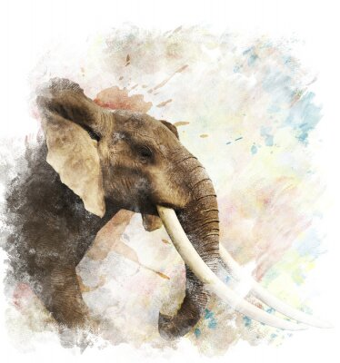 Canvas print Watercolor Image Of  Elephant