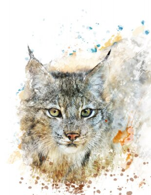 Canvas print Watercolor Image Of Lynx