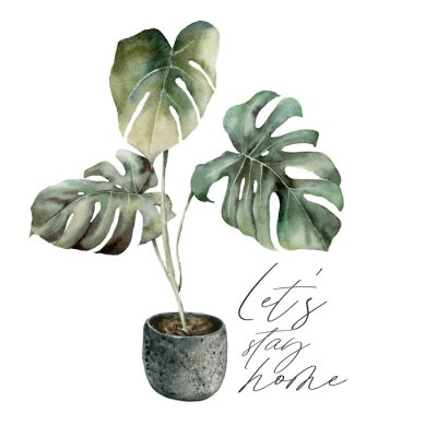 Canvas print Watercolor Lets stay home card with monstera. Isolation during an epidemic. Hand painted exotic plant with pot isolated on white background. Floral illustration for design, print or background.