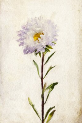 Canvas print Watercolor lilac aster