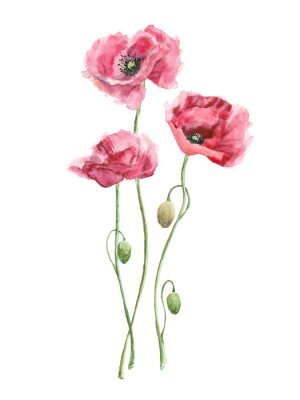 Canvas print watercolor red flowers (poppies)