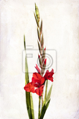 Canvas print Watercolor red gladiolus