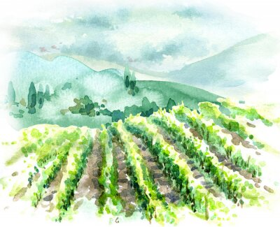 Canvas print Watercolor Rural Scene with Hills, Vineyard  and Trees