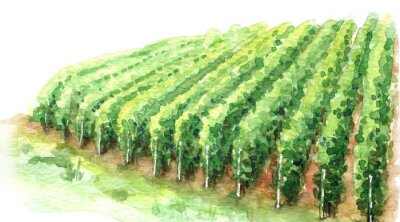 Canvas print Watercolor Sketch Rural Scene Fragment of Vineyard