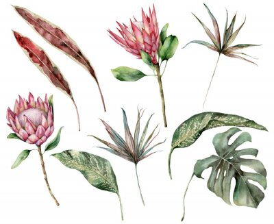Canvas print Watercolor tropical set with protea and palm leaves. Hand painted exotic flower, palm and monstera leaves isolated on white background. Floral illustration for design, print, fabric or background.