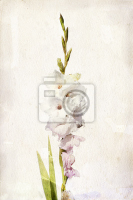 Canvas print Watercolor white gladiolus