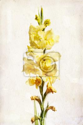 Canvas print Watercolor yellow gladiolus