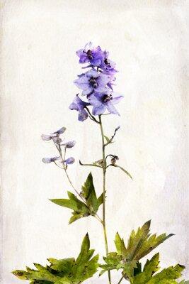 Canvas print Watercolored delphinium