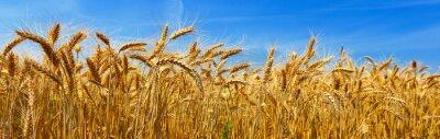 Canvas print Wheat