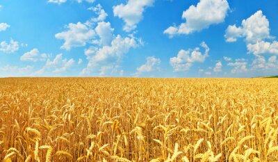 Canvas print Wheat field