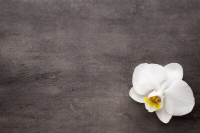 Canvas print White orchid on the grey background.