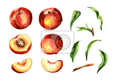 Whole and cut peach fruits and leaves set. Watercolor hand drawn illustration, isolated on white background
