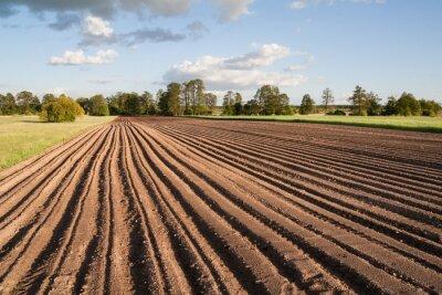 Canvas print Widok na zaorane pole w piękny słoneczny dzień na wsi