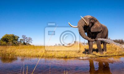 Canvas print Wild African Elephant with a Blue Sky
