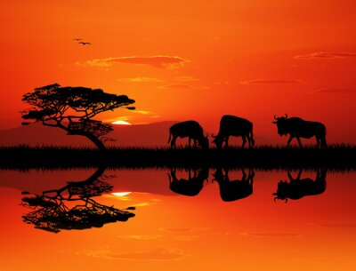 Canvas print wildebeest silhouette at sunset