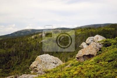 Canvas print wilderness