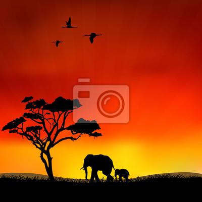 Canvas print wildlife