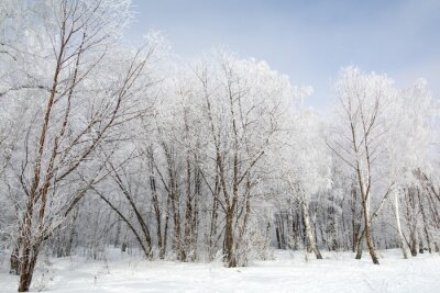 Canvas print Winter forest