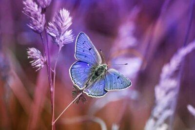 Canvas print маленькая бабочка среди травы в сиреневых тонах