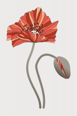 Canvas print бутон  и цветок мака с необычными лепестками