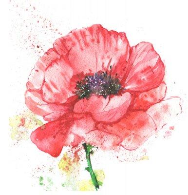 Canvas print красный цветок,мак ,иллюстрация акварелью